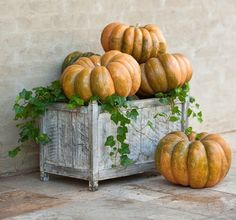 Simple and lovely display with a planter and pumpkins