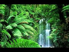 Relaxing Music Sound of Nature Waterfall and Animal