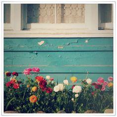 flowers by a windowsill