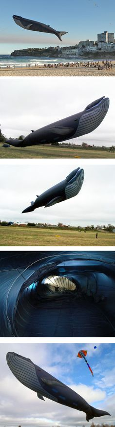Giant blue whale kit