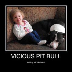 Vicious Pit Bull....Failing Viciousness