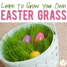 Grow Your Own Easter Basket Grass! This is one of the funnest Easter activities for your family! Kids love to watch it grow! #easter #diy #easterbasket howdoesshe.com