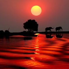 Sunset with elephants-Botswana. Feel so lucky to have witnessed this!