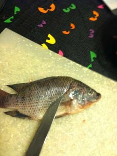 How to filet a small fish (This looks like the method my dad used to use on trout and blue gill. ~UDG)