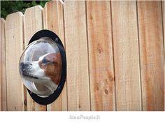 Dog window >> Loving this!