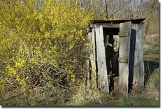 Beauty in bloom around the olde outhouse