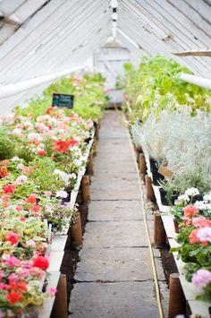 greenhouse obsession, so pretty!