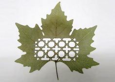 artists, make art, craft, pattern, lorenzo duran, leav, nature design, leaf art, sculptur