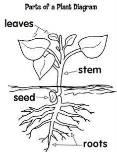 science on pinterest