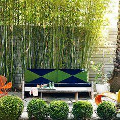 Bamboo screening + round hedges