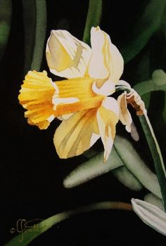 Visions of Spring...Daffodil, painting by artist Jacqueline Gnott