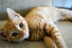 Orange kittens will be the death of me.