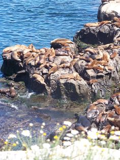 Top things to do in San Diego. La Jolla Cove seals
