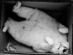 """what do you mean,""""you are too big for that box now""""!?!? I fit PERFECTLY!!!"""