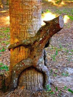 Funny images of the day, 70 pics. Kinky Nature Tree