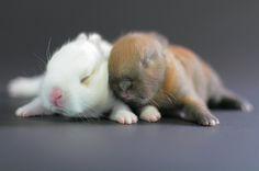 ~~ 11 Day Old Bunnies ~~ @Marcia Bryan
