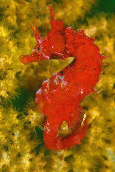 Seahorse colors... Amazing!