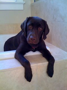 Do we really have to do this bath thing now?