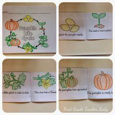 grade teacher, first grade pumpkin freebie, teacher ladi