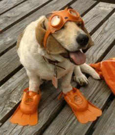 #dog #cute #funny #animals #humor #drivedana #statenisland #newyork #nyc