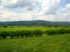 The view from Breaux Vineyards