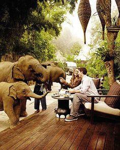Four Seasons, Thailand. The elephants just roam around the property