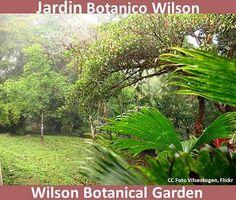 Jardines bot nicos de centroam rica central america 39 s for Jardin wilson