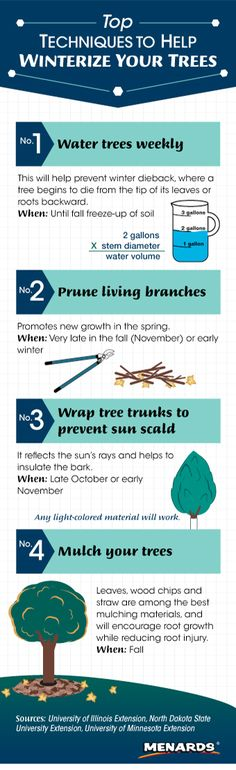 Help your trees survive the winter with these top techniques. http://www.menards.com/main/c-19126.htm?utm_source=pinterest&utm_medium=social&utm_campaign=gardencenter&utm_content=winterize-trees&cm_mmc=pinterest-_-social-_-gardencenter-_-winterize-trees