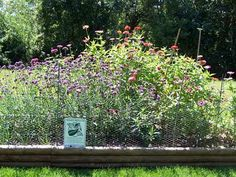 Monarch Waystation #1540