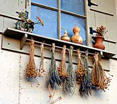 Great site on drying herbs (traditional bunching vs screen)