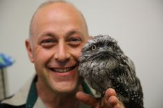 Ribbit the Tawny Frogmouth was abandoned by his mother but has luckily been receiving tender loving care (and a tasty diet of mince and insectivore 10 times a day) at Healesville Sanctuary this week