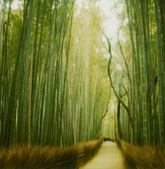 bamboo forest in Kyoto: This just looks like the most otherworldly, surreal place. Can I buy it as a print? I hope so!