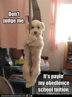 funny dog pictures - I Has A Hotdog: Sure it is; that's what they all say!