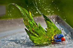 Birdy bath
