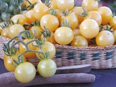 White Currant - sweet little cherry tomatoes and a heavy producer.