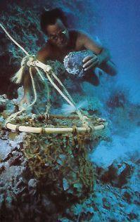 pearl diving?