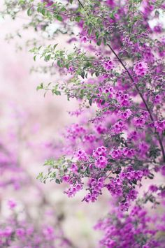 pretty flower photo