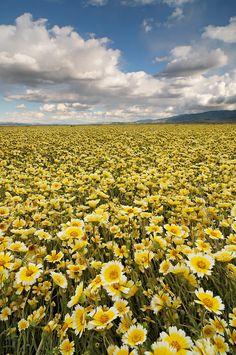 Field of Dreams - Carrizo Plain National Monument.  by Joshua Cripps.