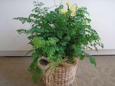 Mirian Decor: Plantas para sombra