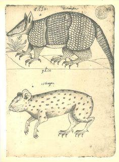 Drawing Mammals Maranhao Brazil Natural History Art to by carambas, $16.00