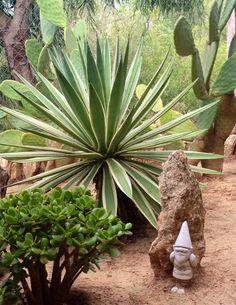 Succulent and gnome, Ibiza