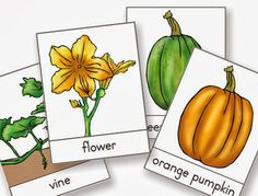Free Montessori Printable: Celebrate Autumn and Halloween With the Life Cycle of a Pumpkin from North American Montessori Center
