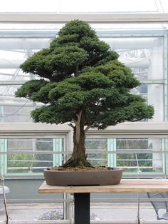 Bonsai Museum by Brooklyn Botanic Garden, via Flickr