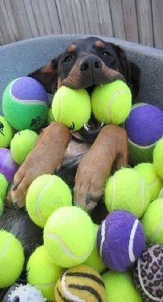 ball happy!