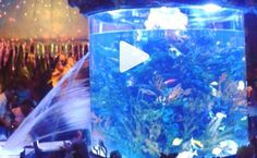 HOLY COW - the giant fish tank at T-Rex in Disney World bursts open during dinner. Crazy video! No fishes hurt!