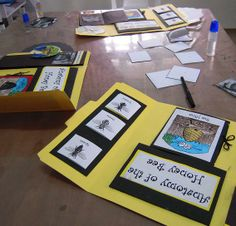 draw, lap books, life cycles of animals, minibeast, school idea, bee lapbook, scienc, book projects, honey bees