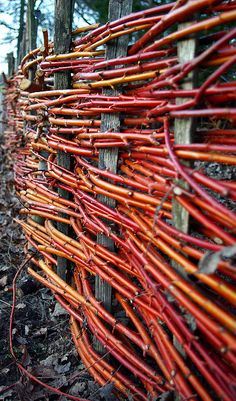 Woven fence with red dogwood branches