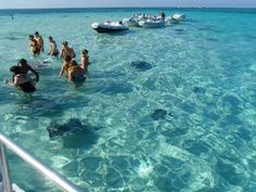 Stingray City - Grand Cayman - 1/5/09