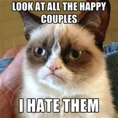 grumpy cat makes me smile.
