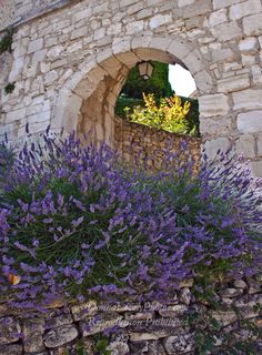 Lavender and Stone Arch ~ Provence